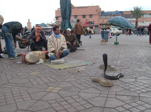 Snake Charmer in the Square