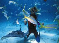 Red Sea snorkelling is the best in the world