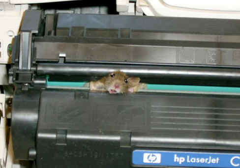 Mouse stuck in cartridge